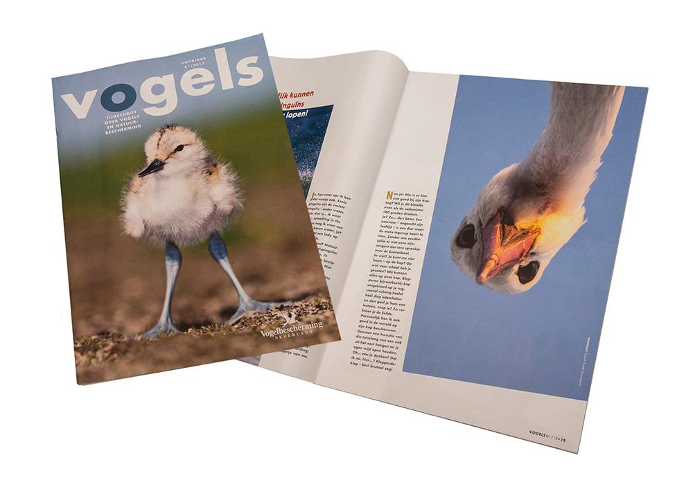 Foto-Ooievaar-Vogel-Vogelbescherming